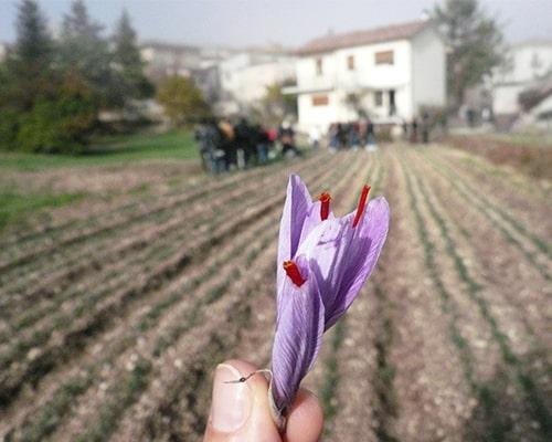 Zaff-tour in Abruzzo: Viaggio alla scoperta dello Zafferano di Navelli