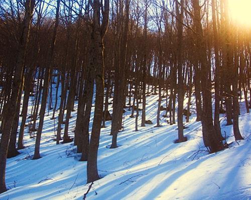 Trekking d'inverno con le ciaspole sulla Majella-faggeto