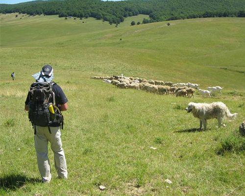 Storie di Lupi e Pastori nel Parco Nazionale d'Abruzzo